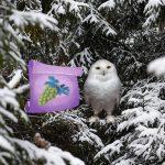 Winter Wonderland Forest Adventure